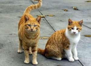谷中になぜ猫がいないのか?ネコが消えた2つの理由