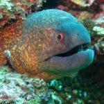 うつぼ(ウツボ)は美容にコラーゲン豊富な魚|ためしてガッテン煮魚特集