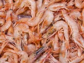 「プーバラン」海老の特徴・画像・生産国・漁獲状況