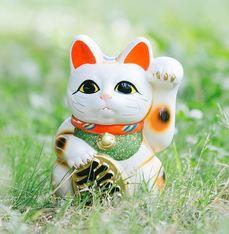 佐賀県高島の酒屋にいるネコ福ちゃんは宝くじ高額当選させる招き猫「坂上どうぶつ王国」放映