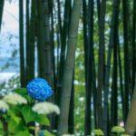 なぜ?竹の花は120年毎に一斉に咲いて枯れるのか?その理由とは?