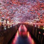 桜の色が変わる「おちょこ」お酒を注ぐと花が咲く不思議