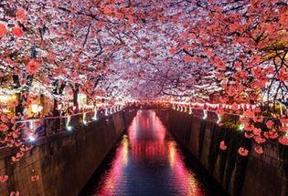 室内で外出しないでインドア花見やエア桜を楽しむ5つの方法