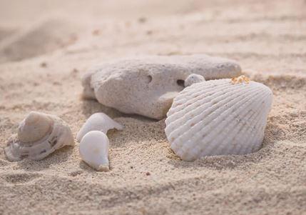 海岸の貝殻拾い持ち帰りが違法?どこまでがOK?日本・海外の諸事情