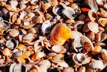 貝殻 持ち帰り  沖縄