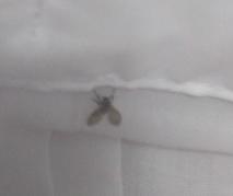 台所や排水溝の小さいミミズのような細長い黒い虫の正体はチョウバエの幼虫